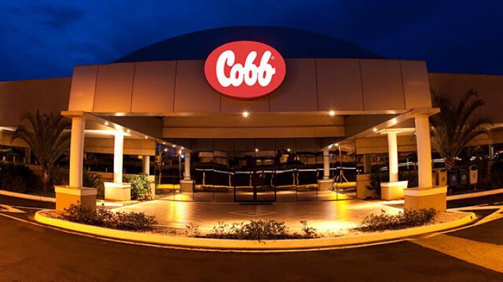Careers » Cobb
