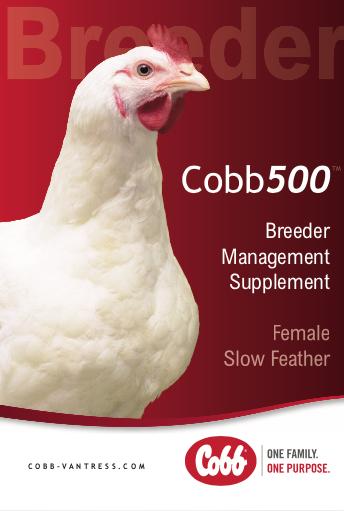 Cobb500 » Cobb